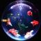 引越し先に水槽を持っていくときの注意点。熱帯魚や金魚の運び方