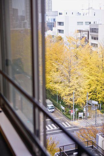 【リノベ暮らしな人々】室内から眺める銀杏並木